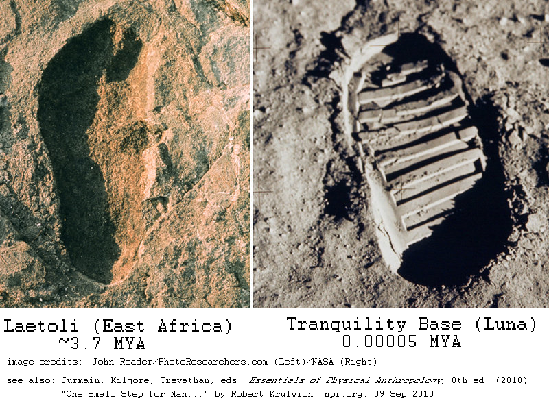 footprints at Laetoli and on Luna, side by side